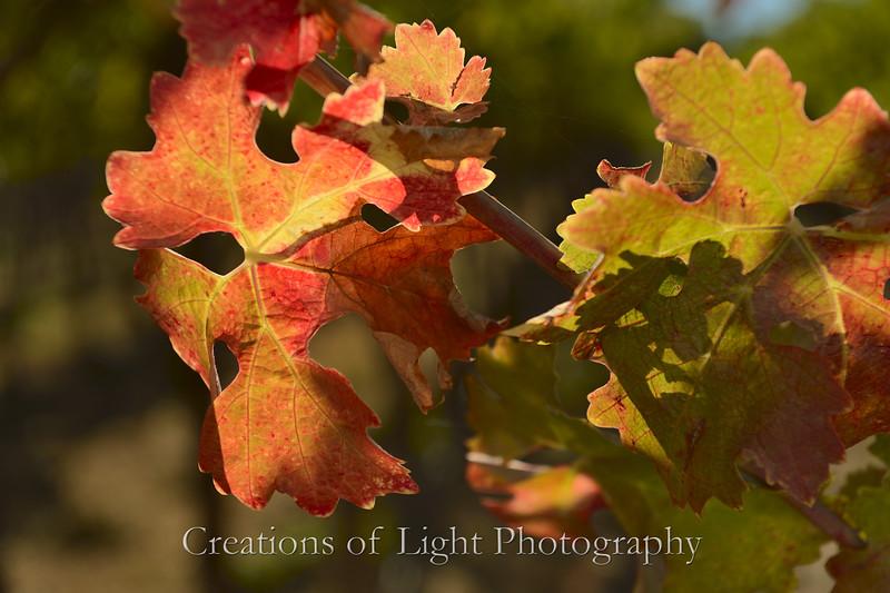 Autumn Shots 29