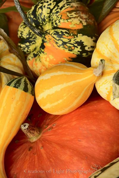 Autumn Shots 55