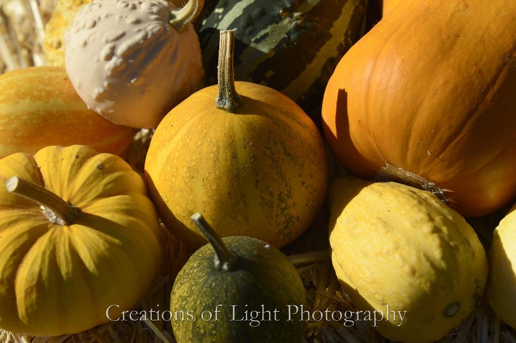 Autumn Shots 15