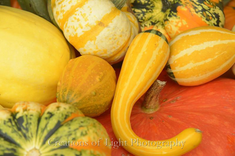 Autumn Shots 58