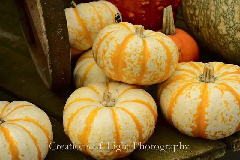 Autumn Shots 50