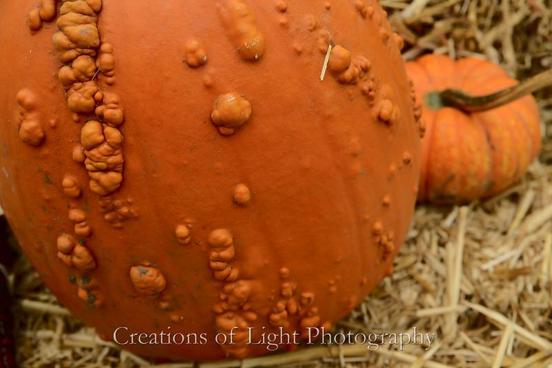 Autumn Shots 44