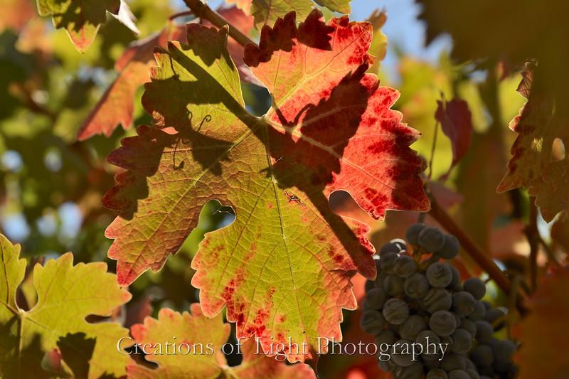 Autumn Shots 36