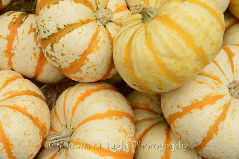 Autumn Shots 42