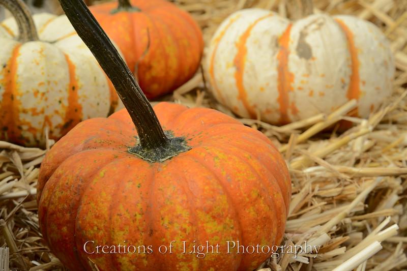 Autumn Shots 47
