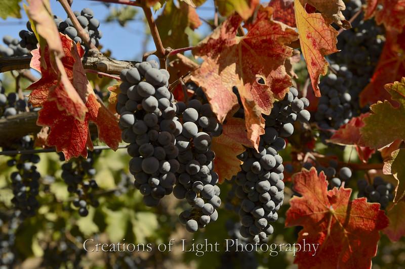 Autumn Shots 38