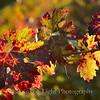Autumn Shots 22