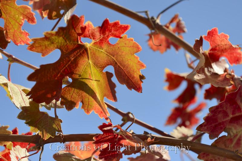 Autumn Shots 30