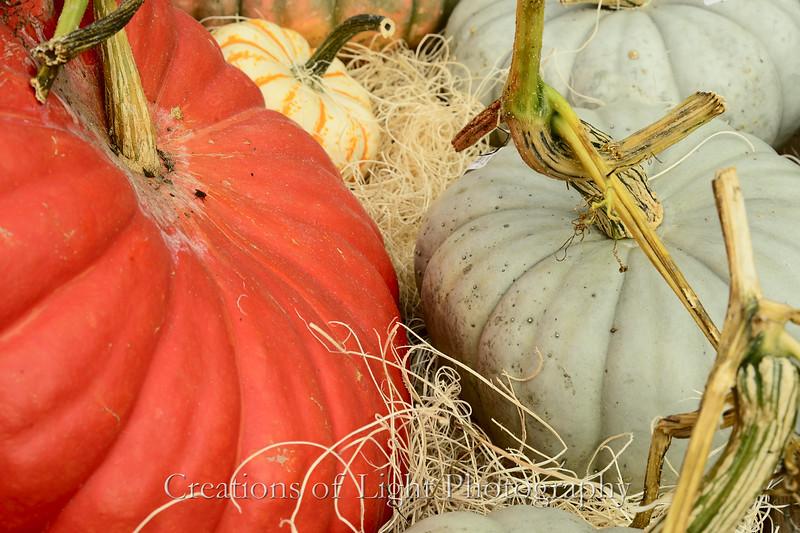 Autumn Shots 53