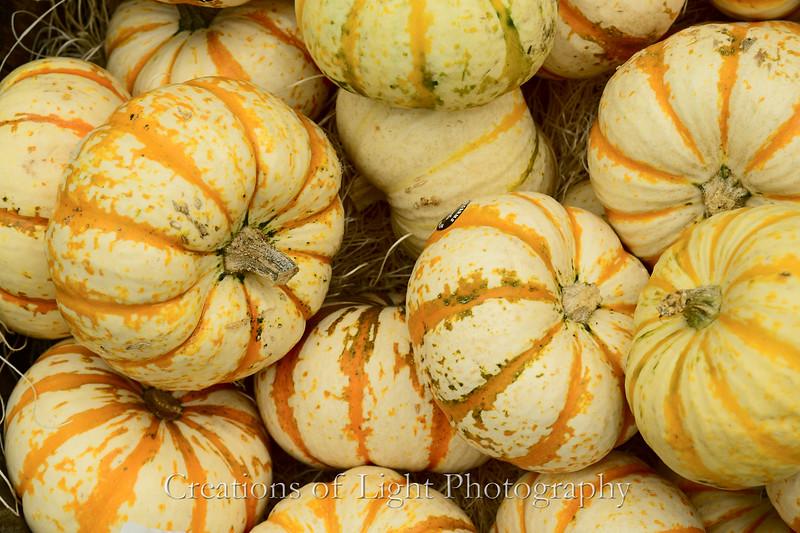 Autumn Shots 41