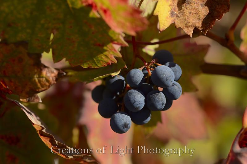 Autumn Shots 16