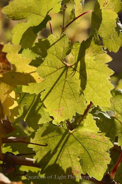 Autumn Shots 18