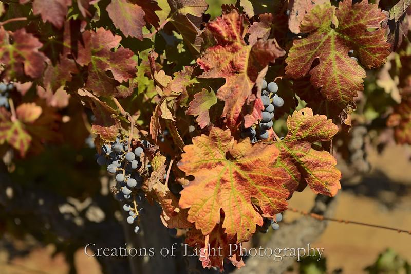 Autumn Shots 19