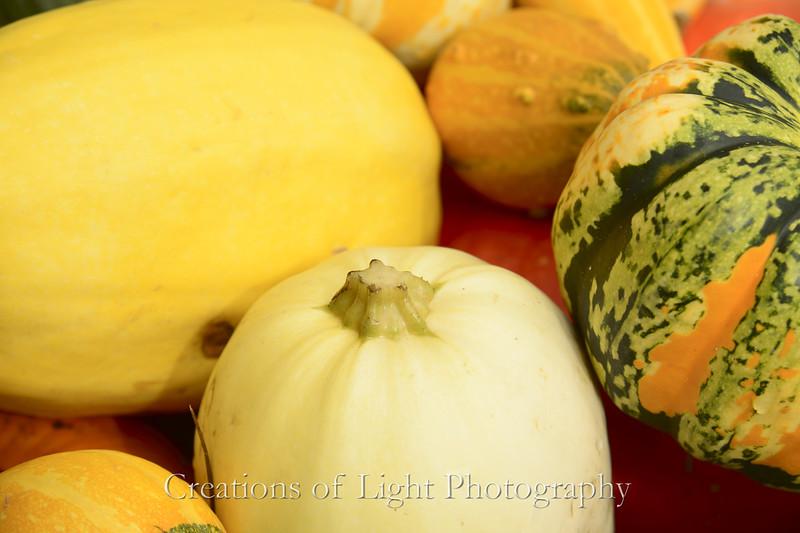 Autumn Shots 57