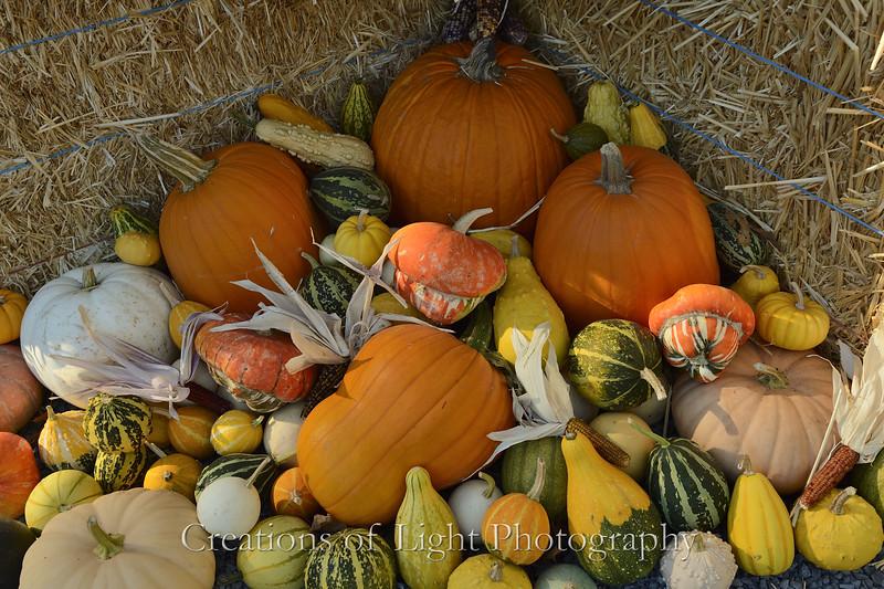 Autumn Shots 10