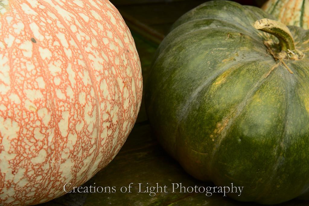 Autumn Shots 48