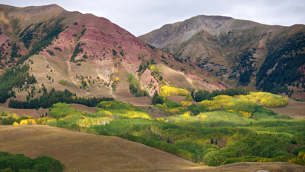 Aspens Turning - Crested Butte, Colorado