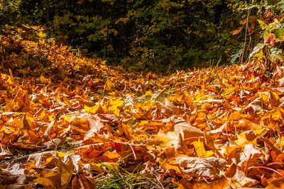 Saugatuck State Park Fall 2015