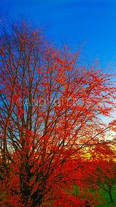 Autumn in Hampstead Heath