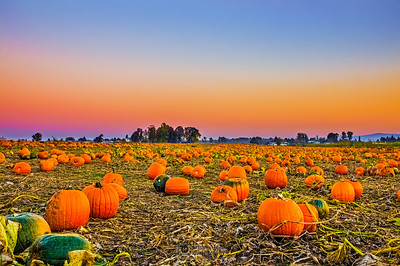 """Orange Crush,"" Sunset over the Pumpkin Patch, Portland, Oregon"