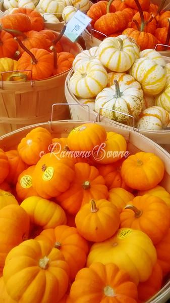 11. Autumn Gourds