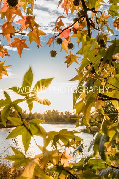 Morton Arboretum Fall 2017-26-2-1.jpg