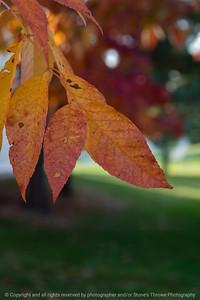 015-leaves_autumn-wdsm-10oct20-08x12-008-400-8558