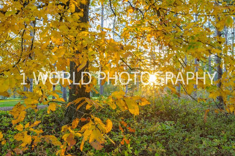 Morton Arboretum Fall 2017-47-2-14.jpg