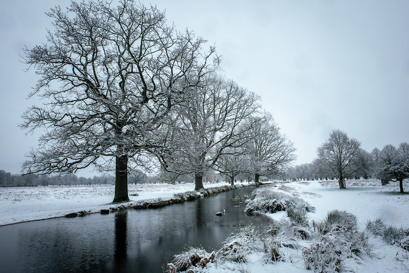 Bushy Park, Surrey, UK