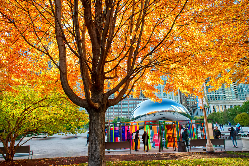 Autumn at the Bean: Colors Everywhere