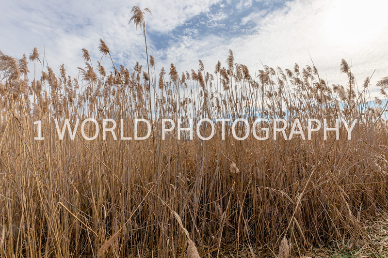 202011202020_11_20 Tall Pampas Grass002--2.jpg
