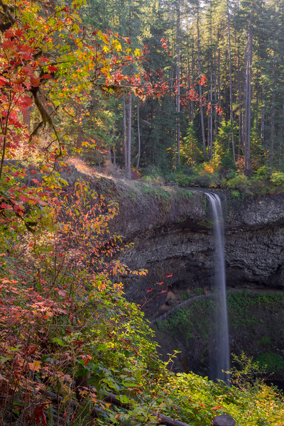 Autumn at Silver Falls (Vertical)