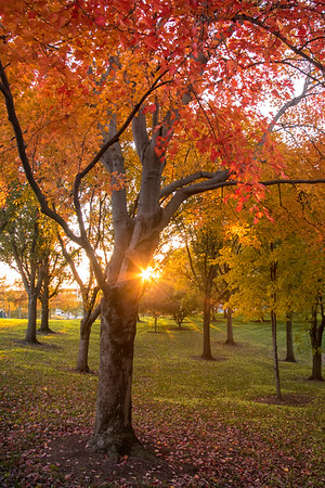 Images of Autumn at Gateway Arch National Park