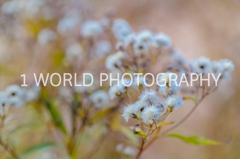 201911052019_11 Morton Arboretum166--7.jpg