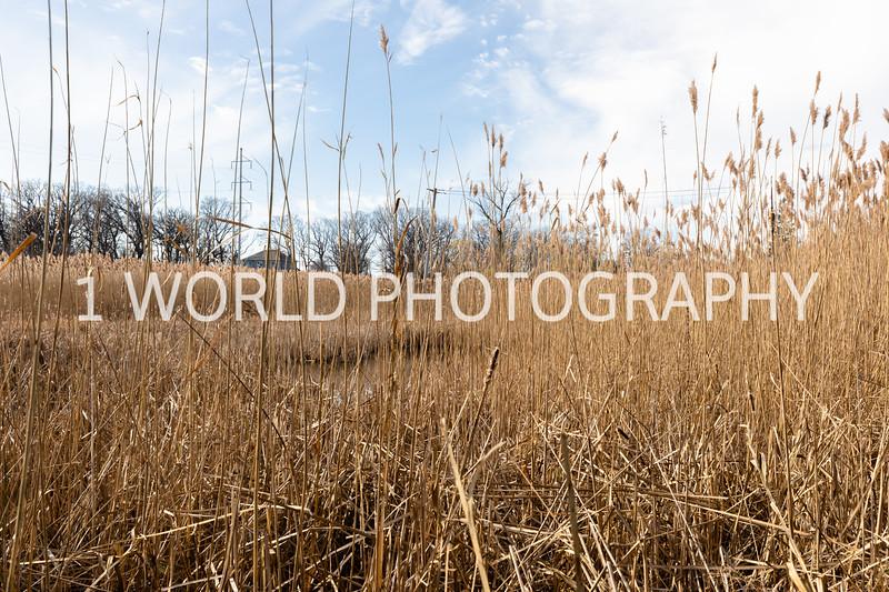 202011202020_11_20 Tall Pampas Grass060--8.jpg