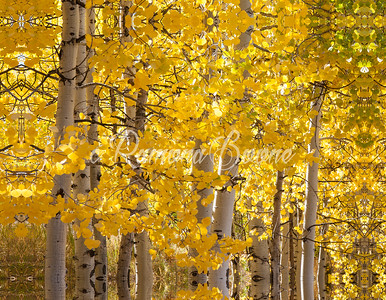 13. Autumn Aspen