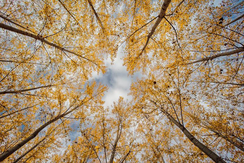 Starlight made of trees