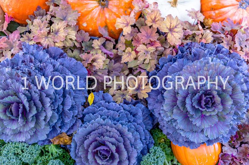 Morton Arboretum Fall 2017-66-15.jpg
