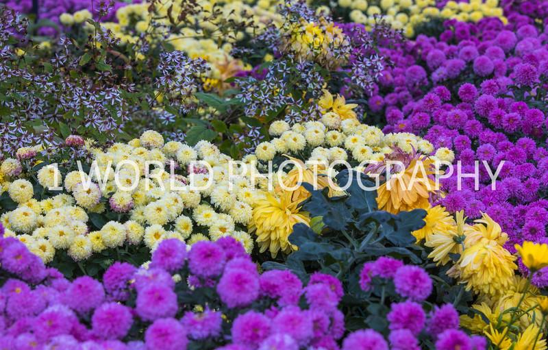 Chicago Botanice Garden Fall_16-4.jpg