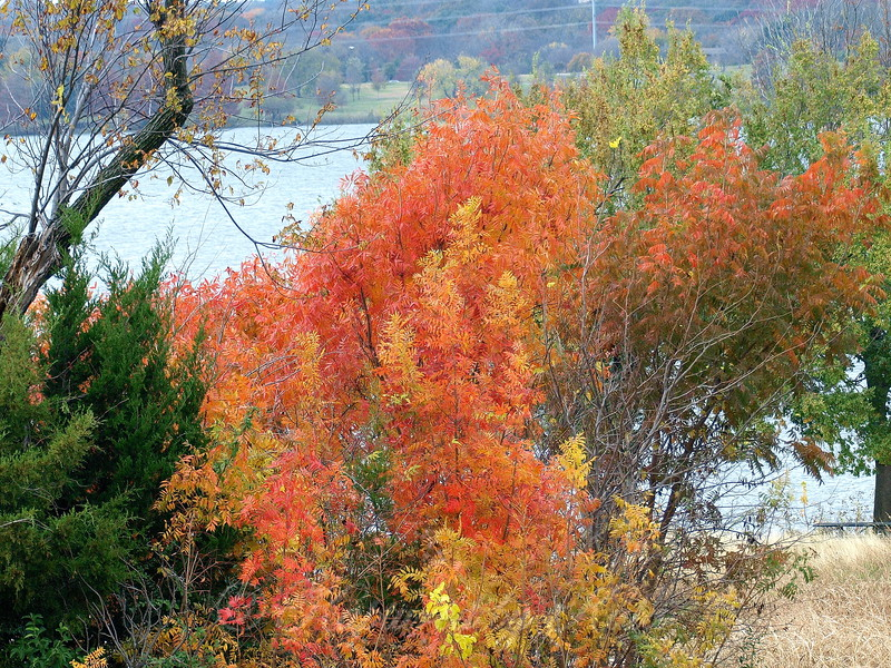 Don't Blink, You Might Miss Autumn In North Texas