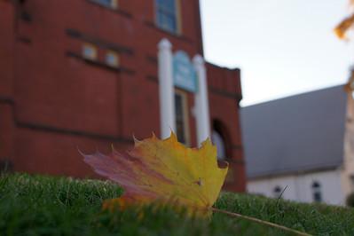 Lone Lawn Leaf