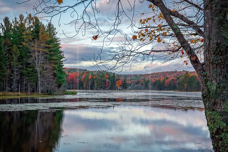 Gates Pond