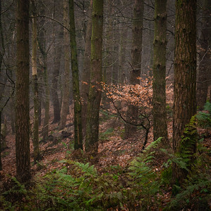White Hill Wood_1