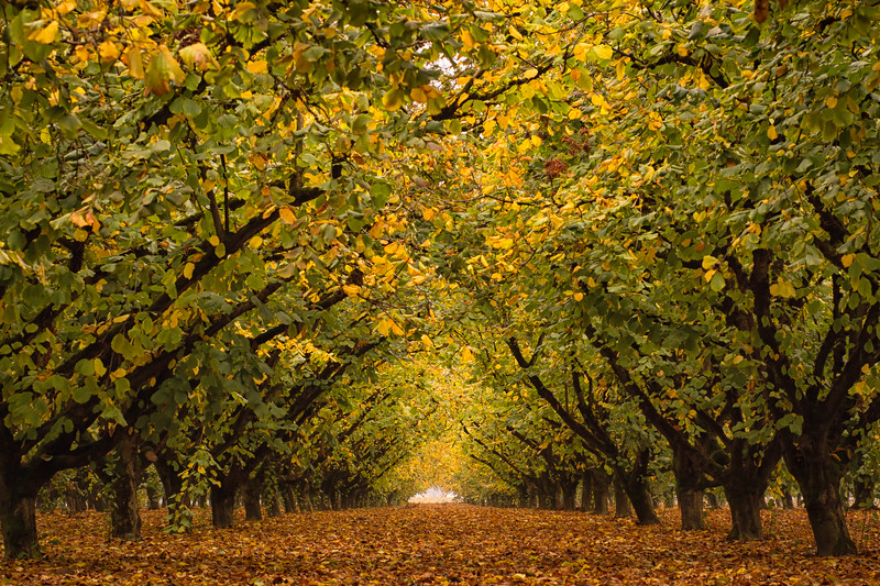 Autumn in the Grove