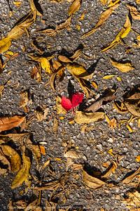 015-leaves_autumn-wdsm-11oct20-08x12-008-400-8592