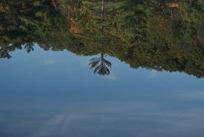 Tree reflector
