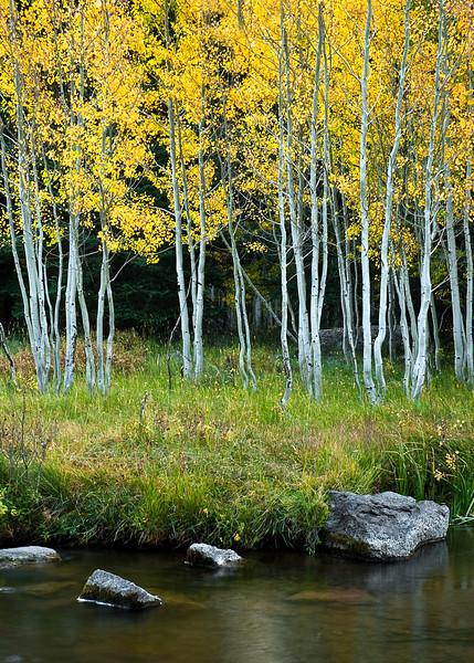 Aspen Grove and Stream