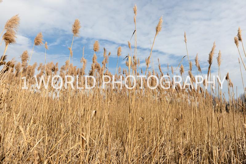 202011202020_11_20 Tall Pampas Grass027--6.jpg
