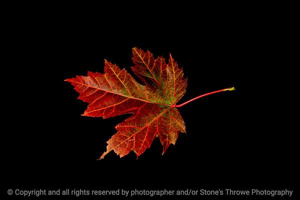 015-leaf-wdsm-25sep19-12x08-008-500-4075