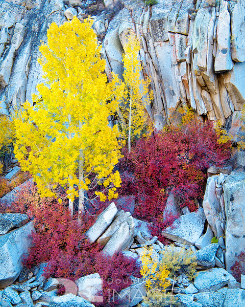 Color in the Canyon